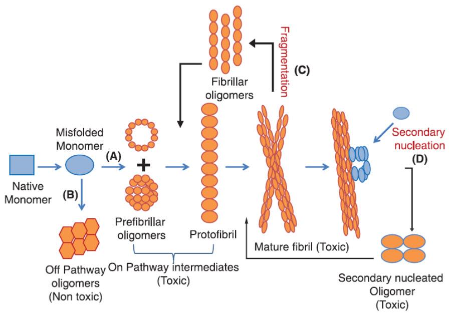 oligomer proteins